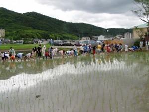 雄町米で造る純米酒体験ツアー